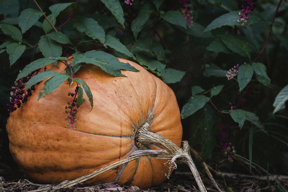 PumpkinsOnPorches_andYards_0010.jpg