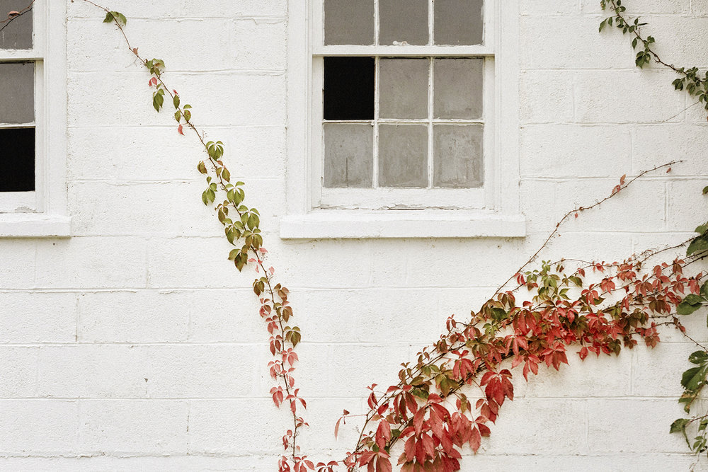 OldHouse_Vines_0008.jpg