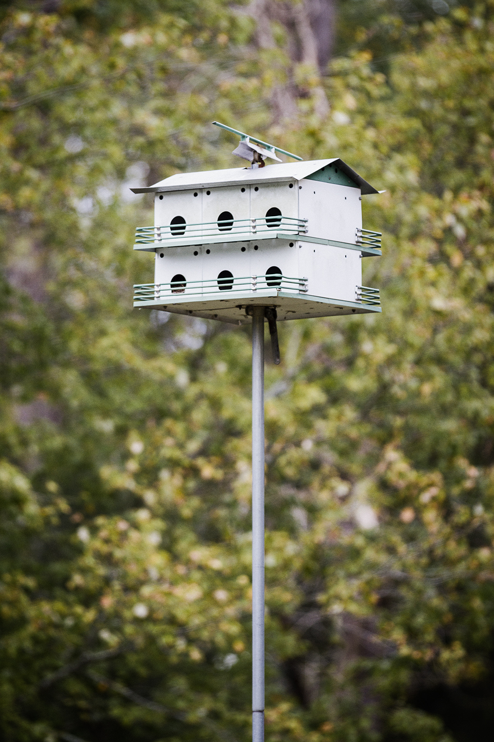 BirdHouse_Williamsburg_0002.jpg