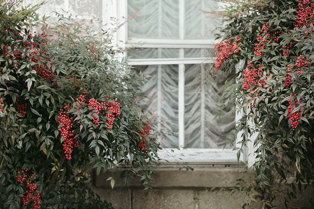 Nandina_WhiteWindow_0001.jpg