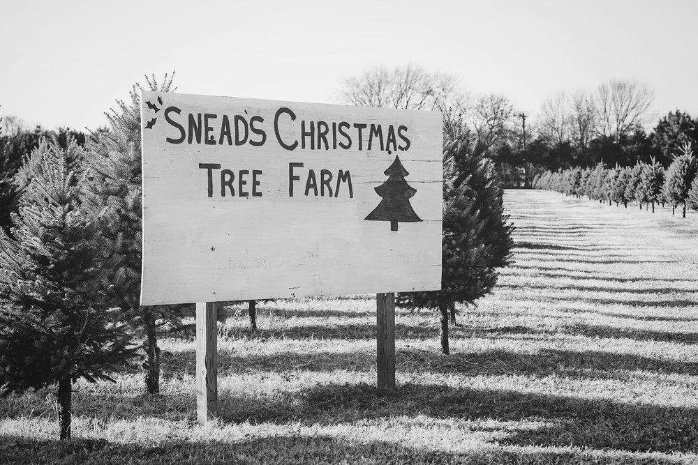 SneadsFarm_ChristmasTrees_0003.jpg