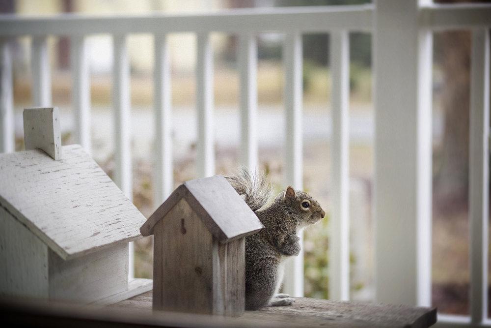 squirrel_on_front_porch_0007.jpg