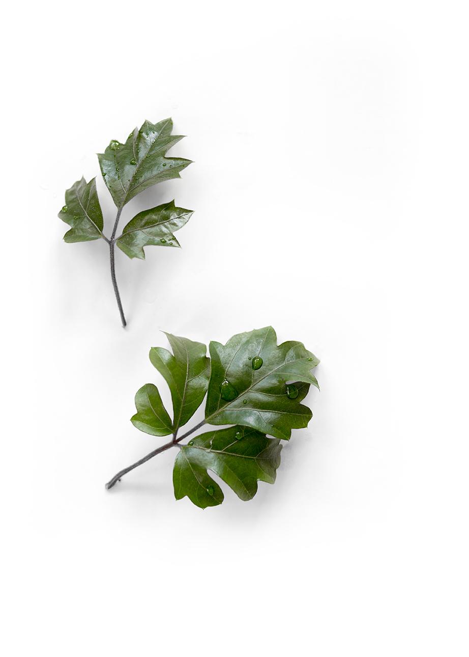 Still_houseplants_0011_crop.jpg