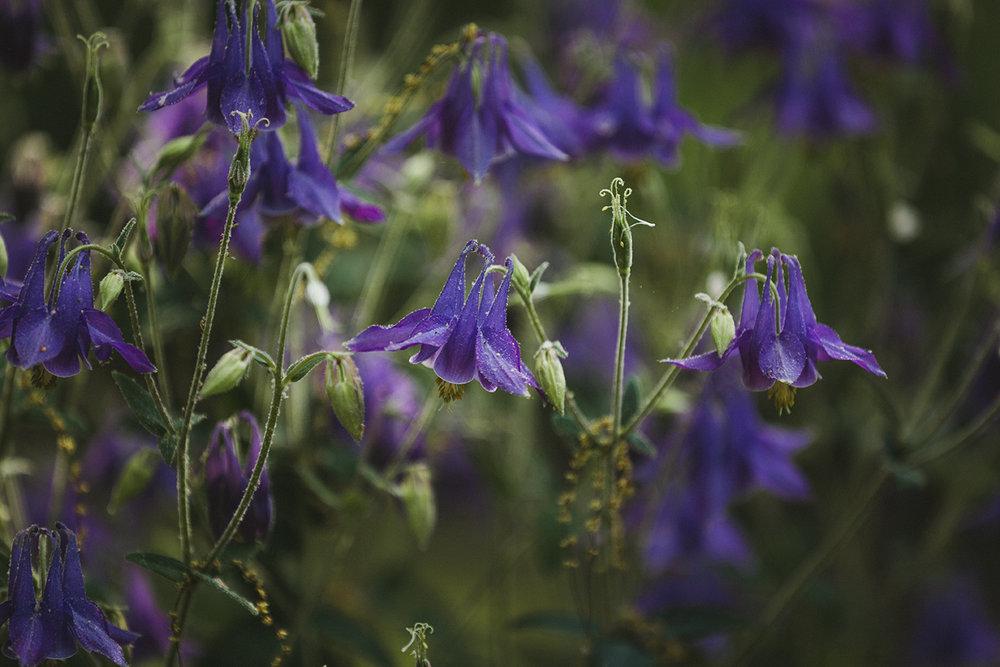 Peonies_Garden_0007.jpg
