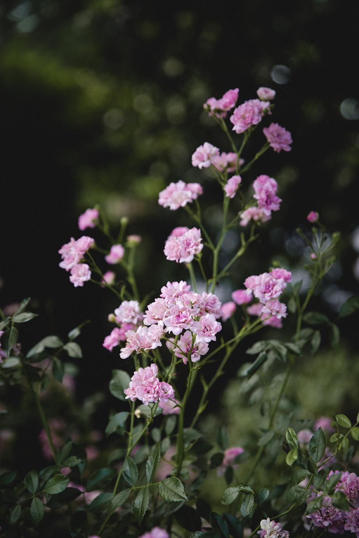 rose_garden_0011.jpg