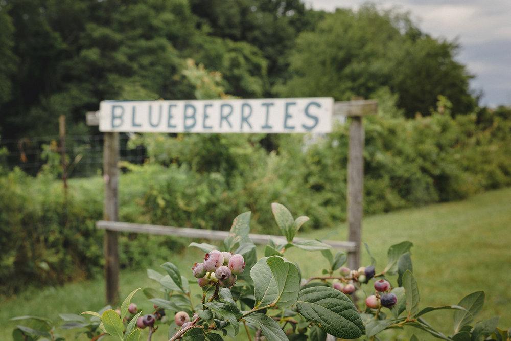 BlueberryPicking_EllsFarm_0029.jpg