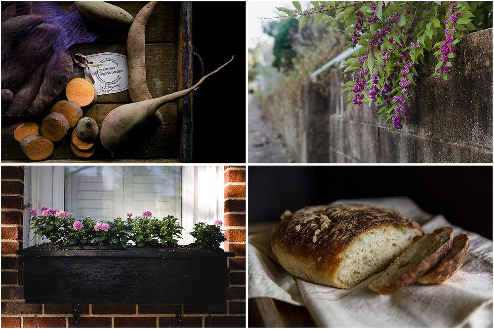 Sweet_Potatoes_BlenheimGardens_Collage.jpg