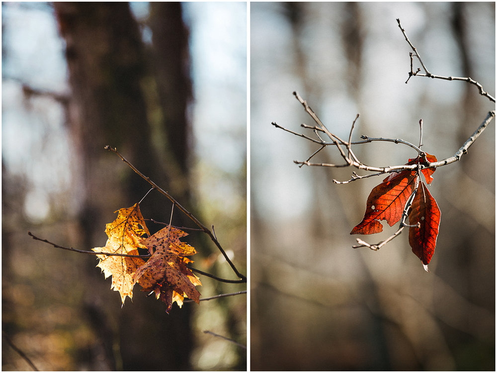 SpotsylvaniaBattlefield_WinterWalk_Leaf_Diptych.jpg