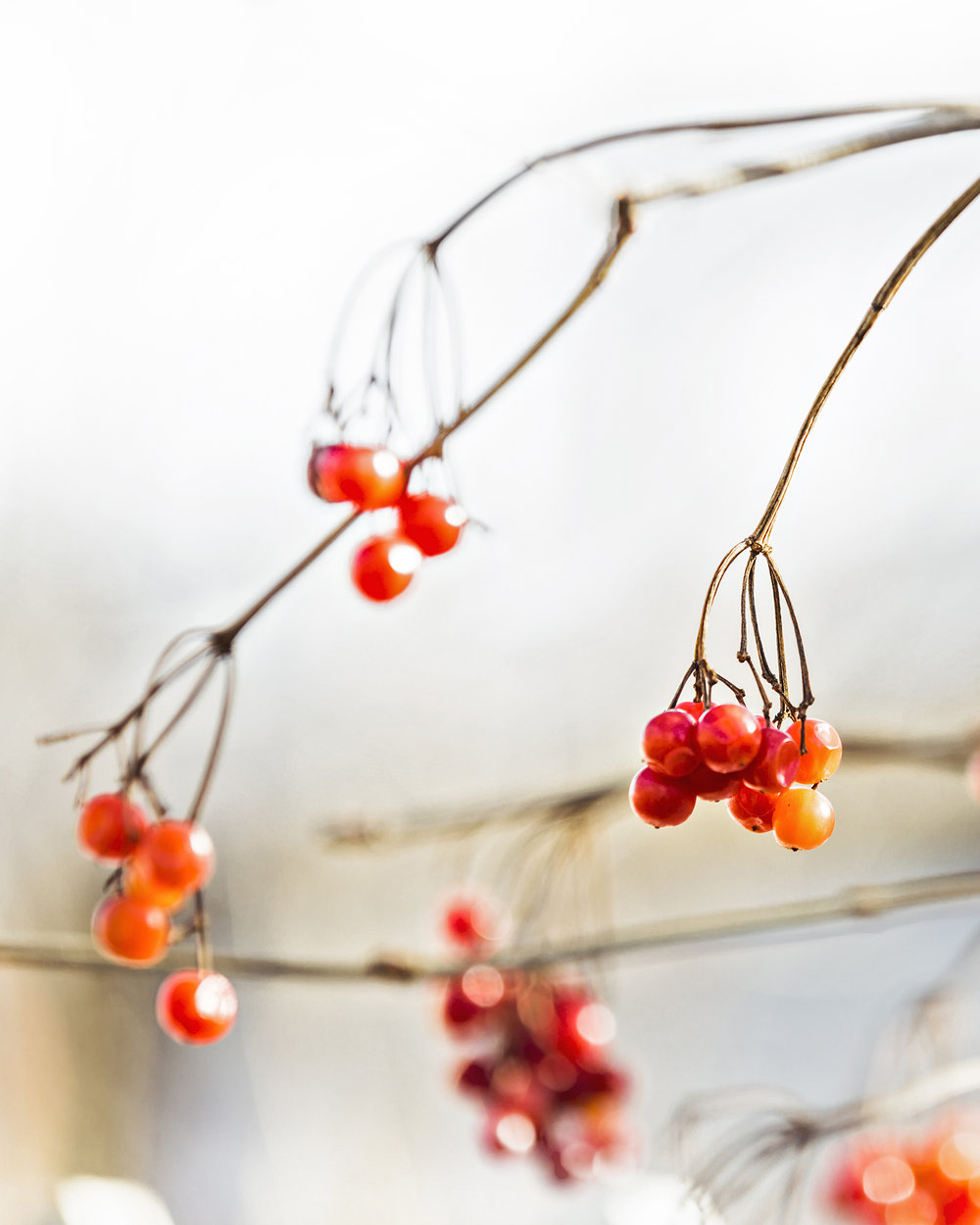 on red berries