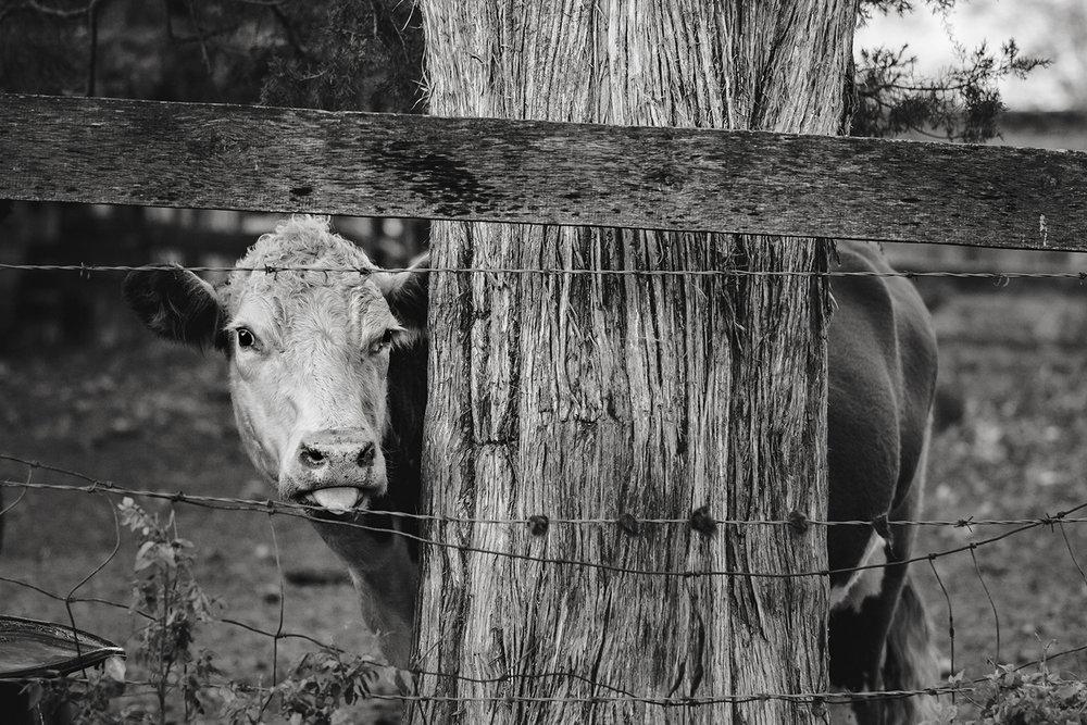 Homestead Farm, 2017, Route 522, Culpeper County, Virginia