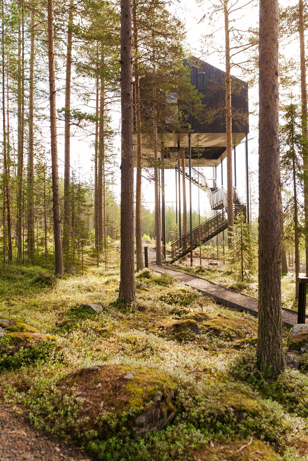 treehotel-sweden.jpg