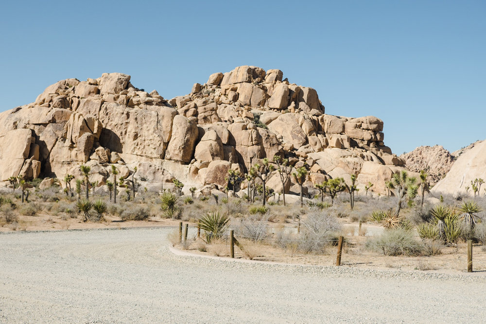 joshua-tree-adventure-9467.jpg