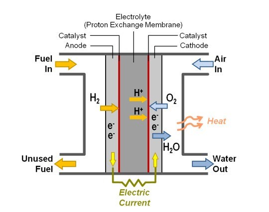 By passing through a catalyst the hydrogen is split between its electrons and protons. Once at the membrane the positive electrons remain but the negative electrons run on the outside creating a circuit. Oxygen is finally combined with the hydrogen ions to form water and heat energy.