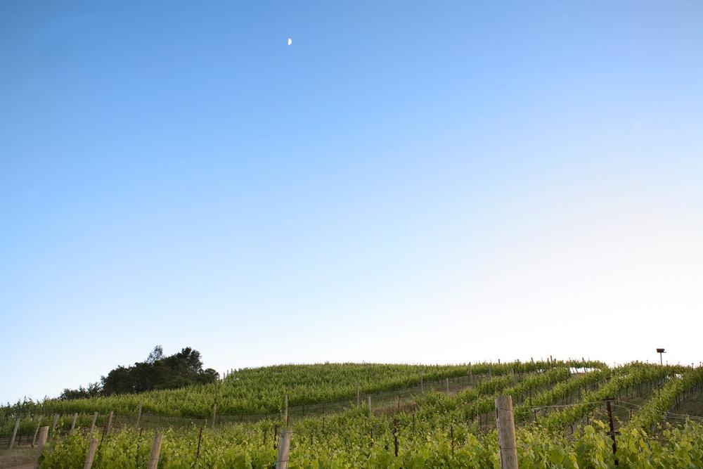 wine_7.jpg