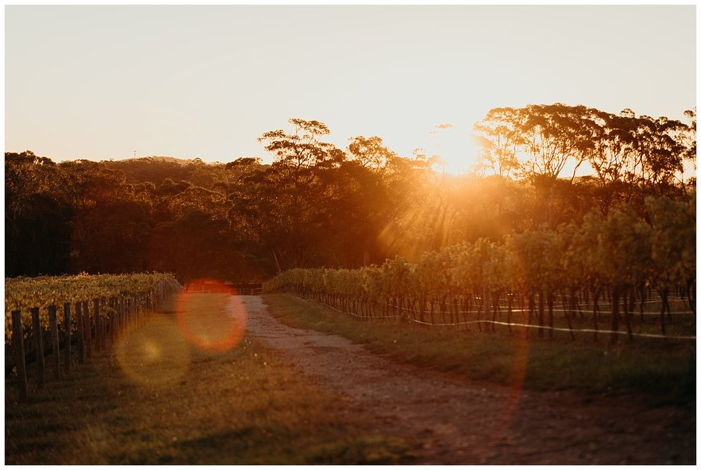 Bowral Southern Highlands Autumn Wedding - Centennial Vineyards Sunset
