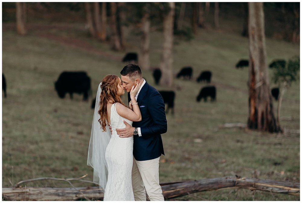 Bowral Southern Highlands Autumn Wedding - Centennial Vineyard bride and groom in field with cows