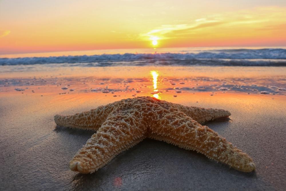 Starfish and the morning sun.