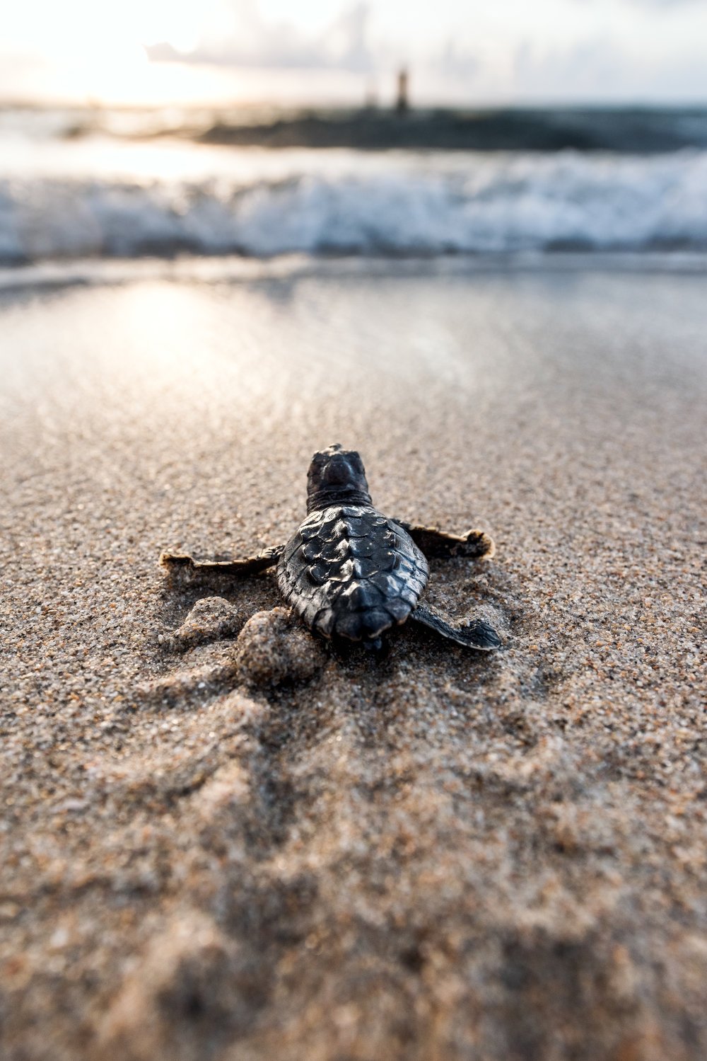 Save our turtles! Protect our beaches.