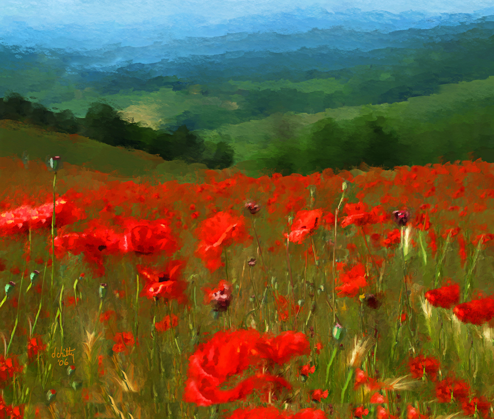 Tuscany Poppies.jpg