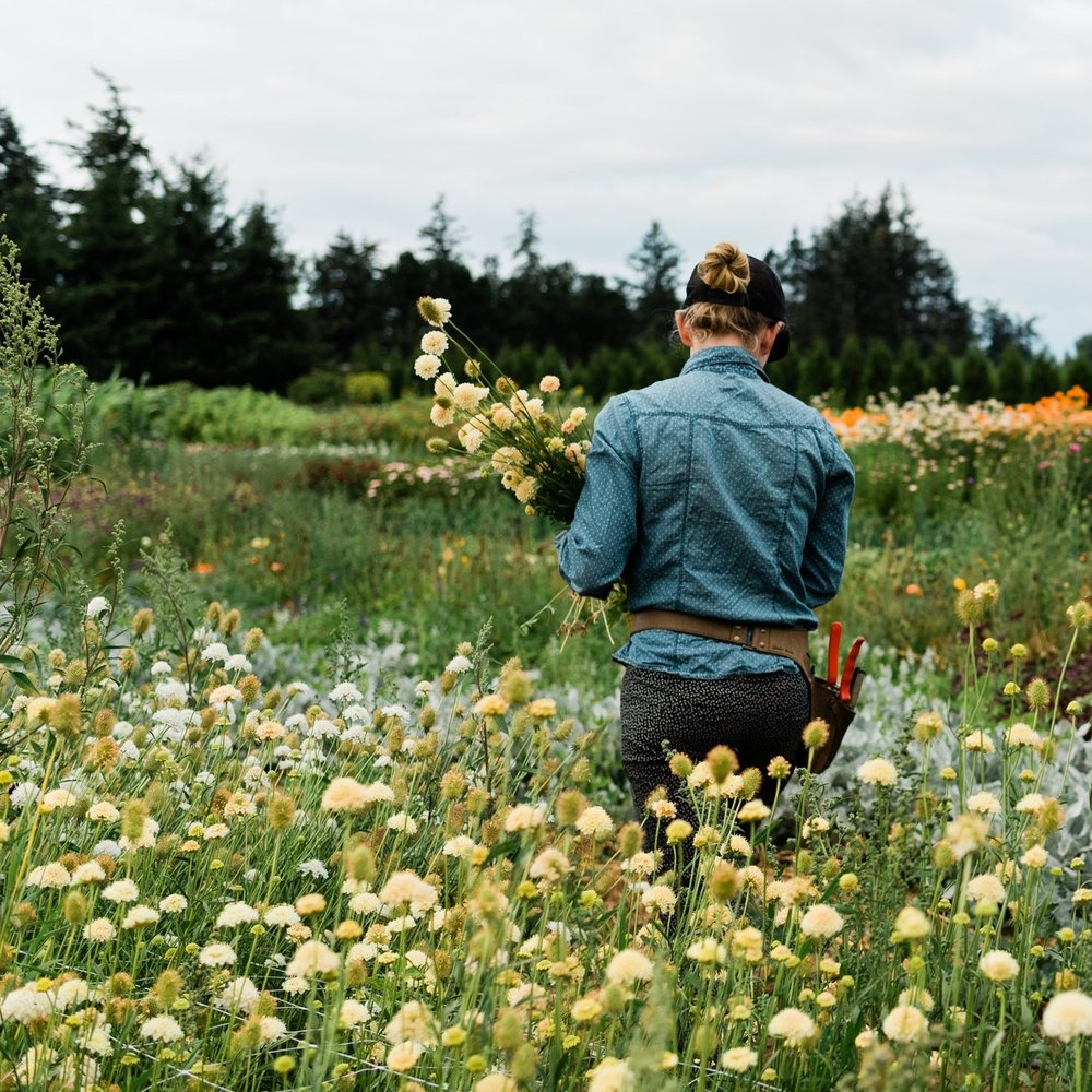 FreerangeFlowers_BellinghamWA_August_CaylieMashPhotography_12.jpg