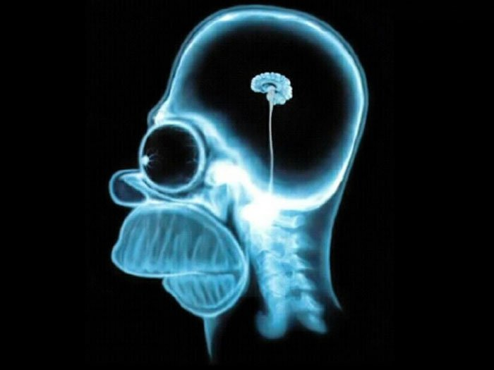 Homer brain.jpg
