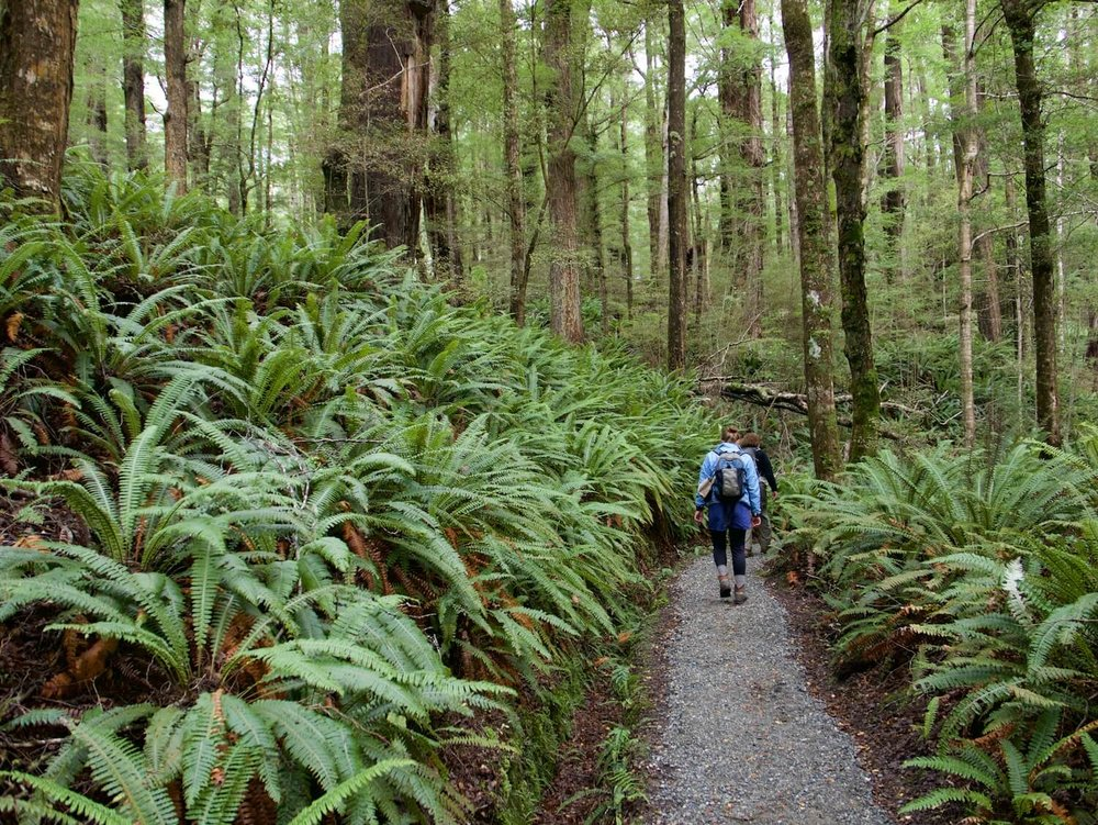 images_phocagallery_winter-rimu-1-july-201110-charlie-jacobs_09k (1).jpg