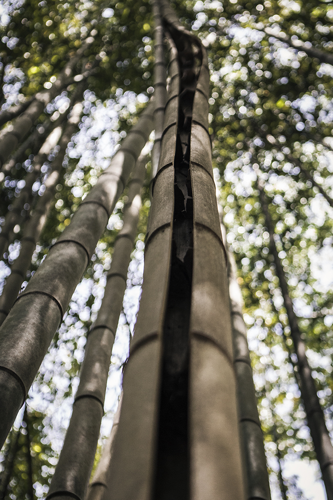 Exploring_bamboo_forest_in_East_Palisades_Trail_by_Atlant_photographer_Chanel_French_7