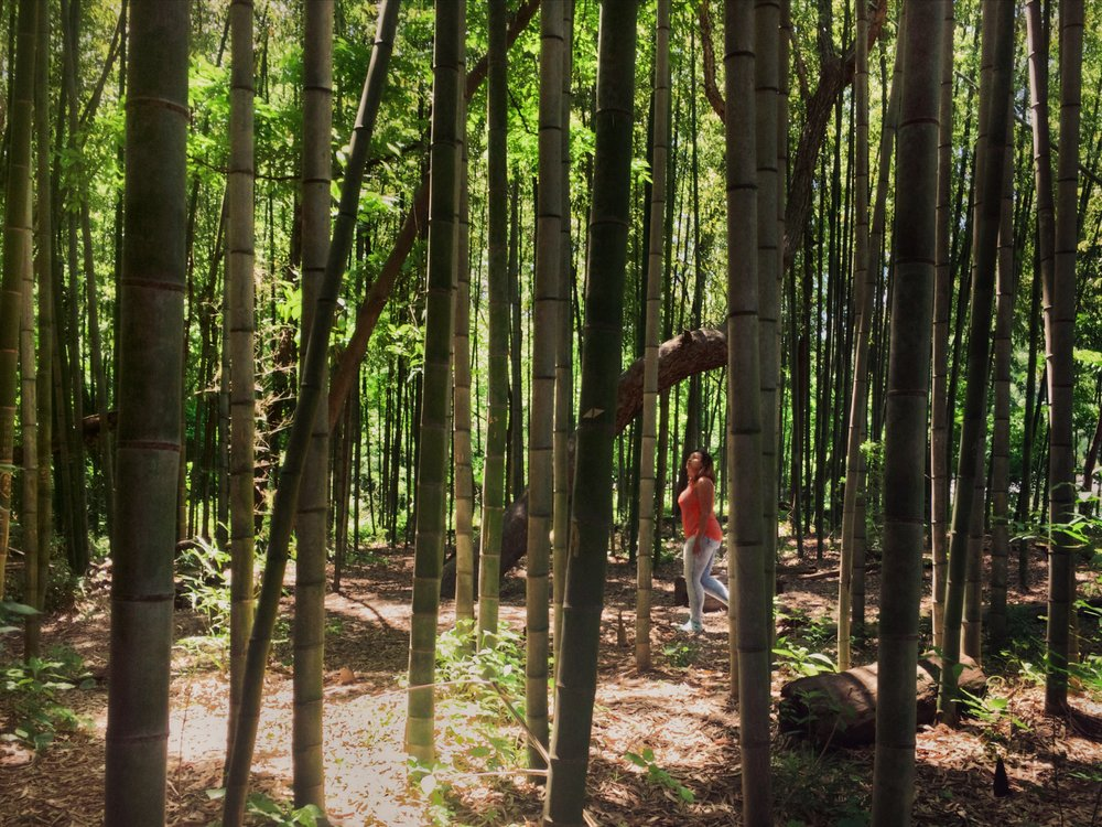 Exloring_bamboo_forest_East_Palisades_trail_by_Atanta_photographer_Chanel_French_9