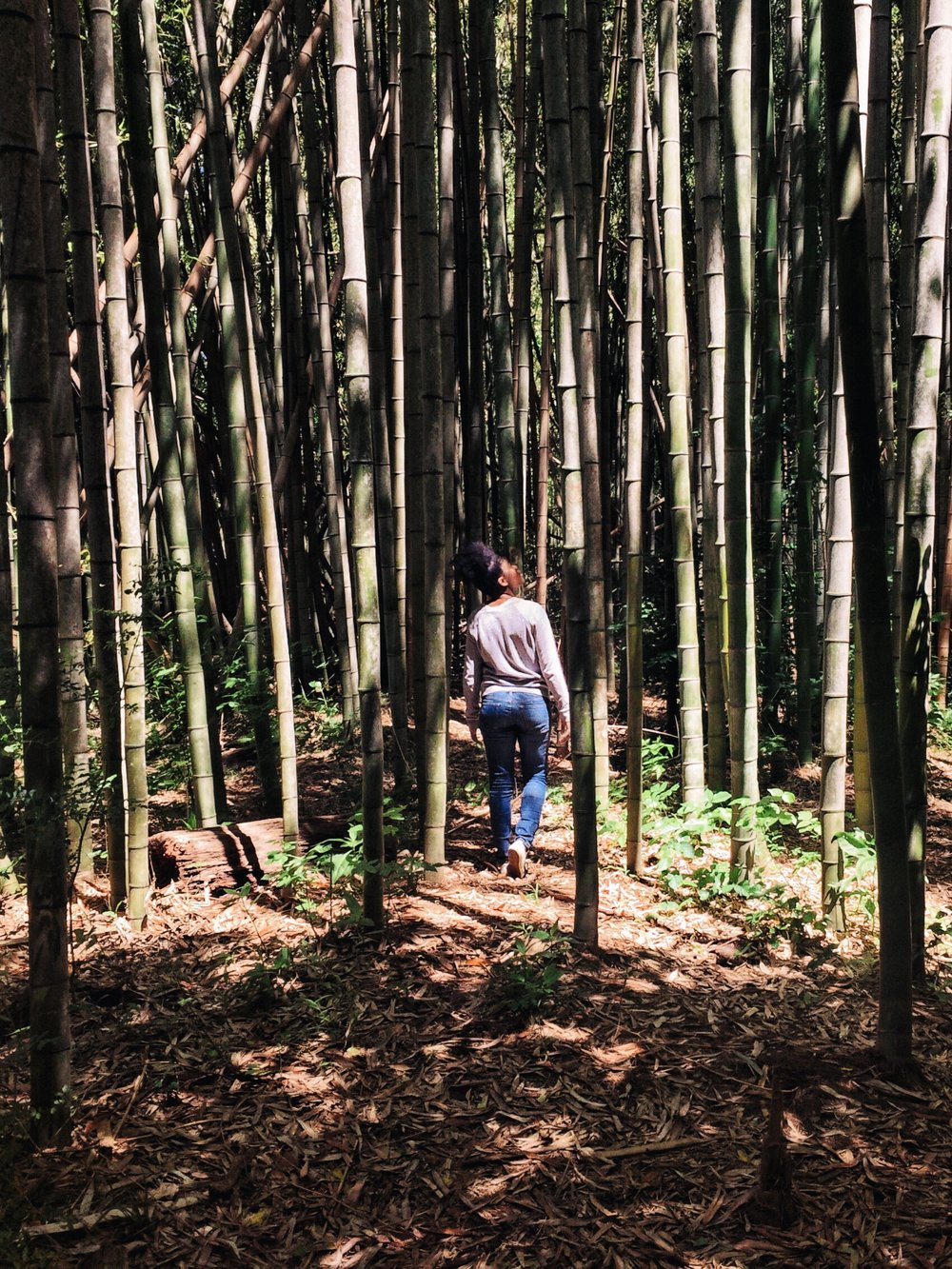 Exloring_bamboo_forest_East_Palisades_trail_by_Atanta_photographer_Chanel_French_10