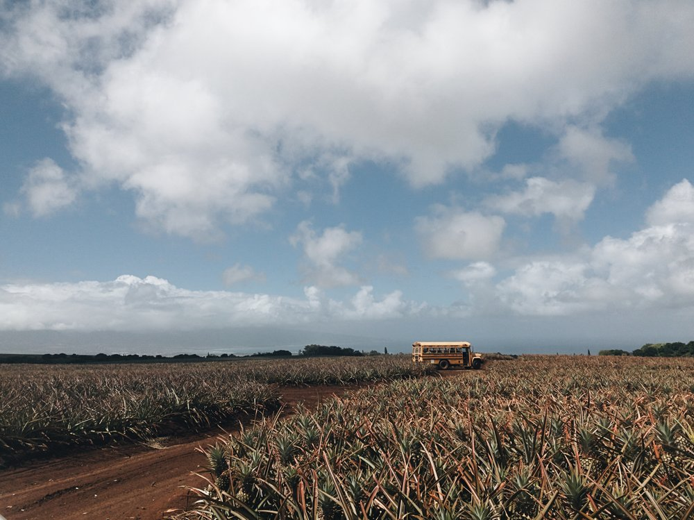 Hawaii-trip-pineapple-farm-by-Atlanta-photographer-Chanel-French-1