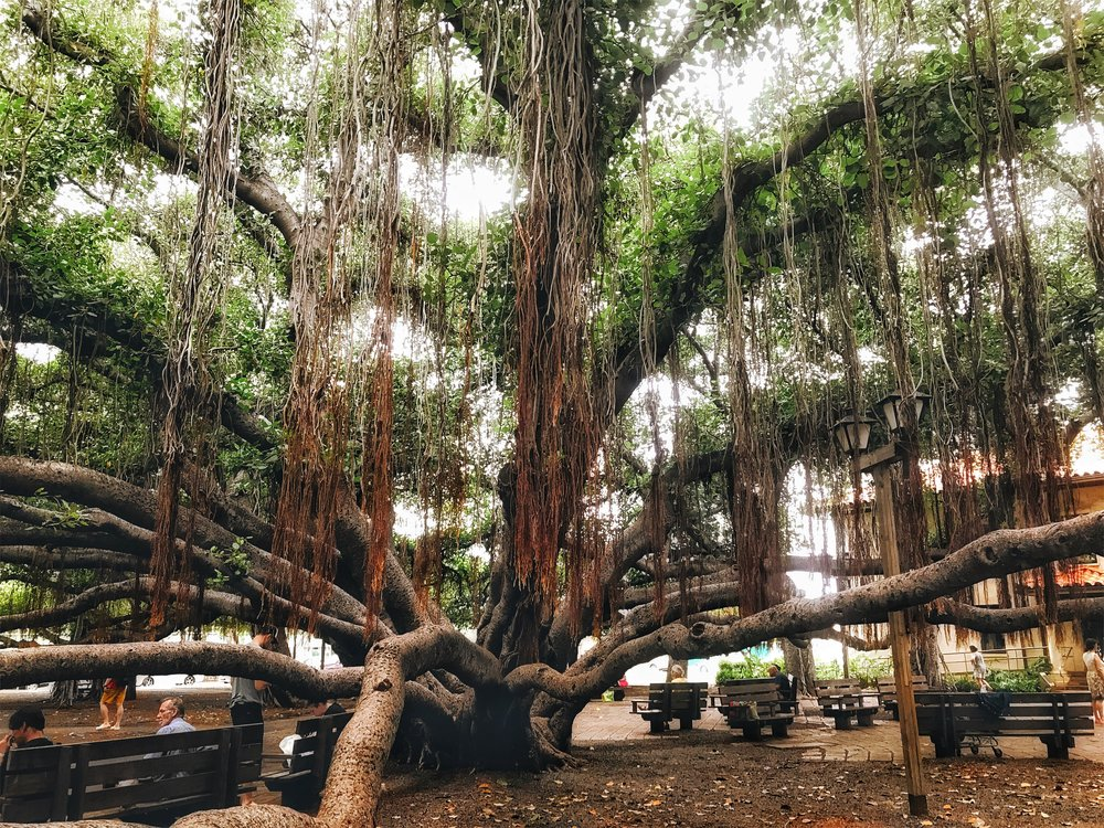 Hawaii-Lahaina-largest-banyan-tree-by-Atlanta-photographer-Chanel-French-19