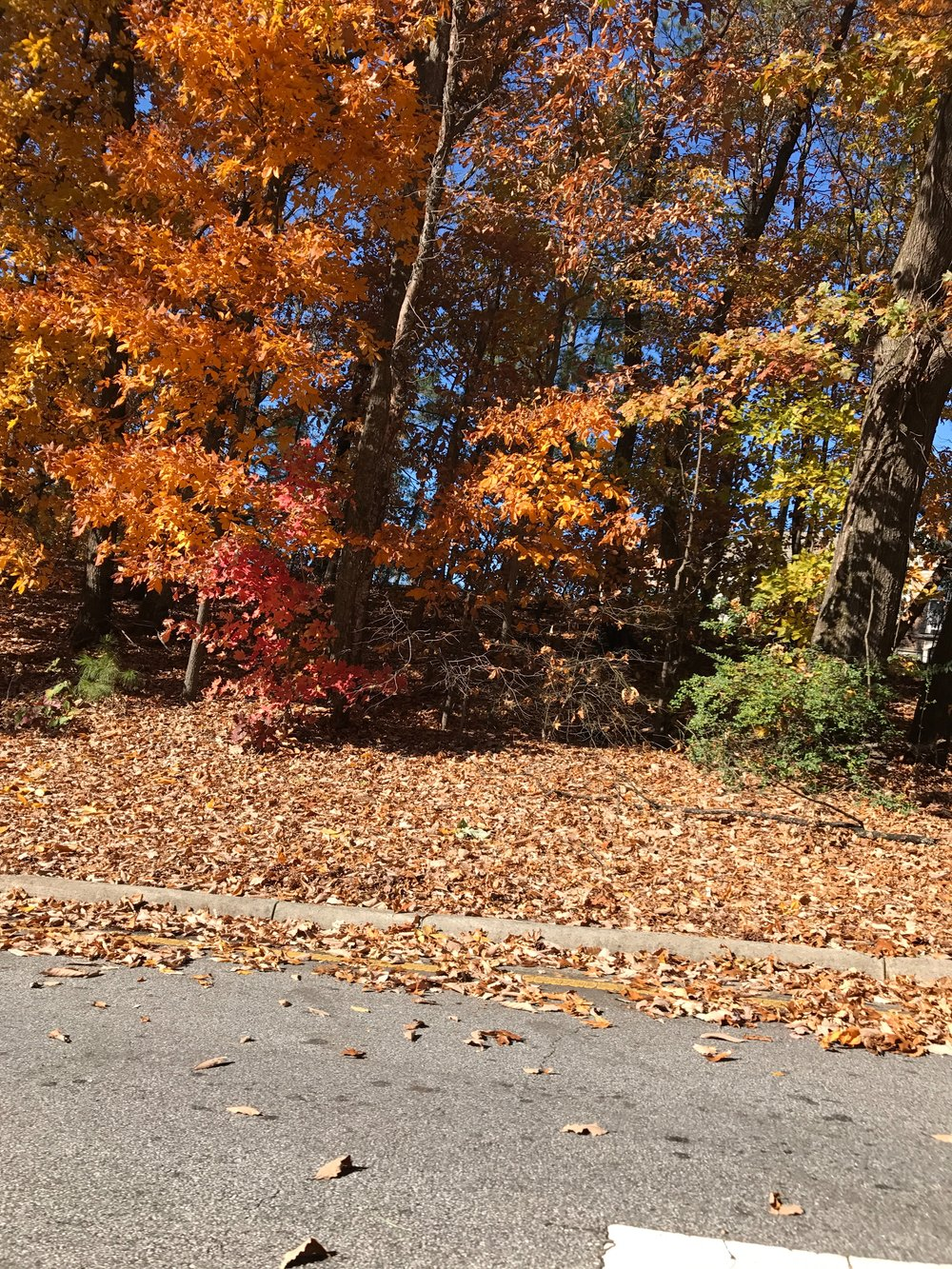 pullback-of-fall-leaves-backdrop