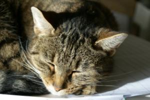 Ada, el gato de Madeleine con el que me conecté.