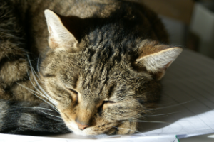 Ada, Madeleine`s Katze