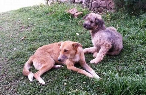 Lola and Chaska