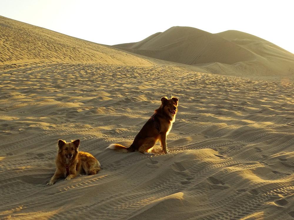 Killa and Inti on holidays