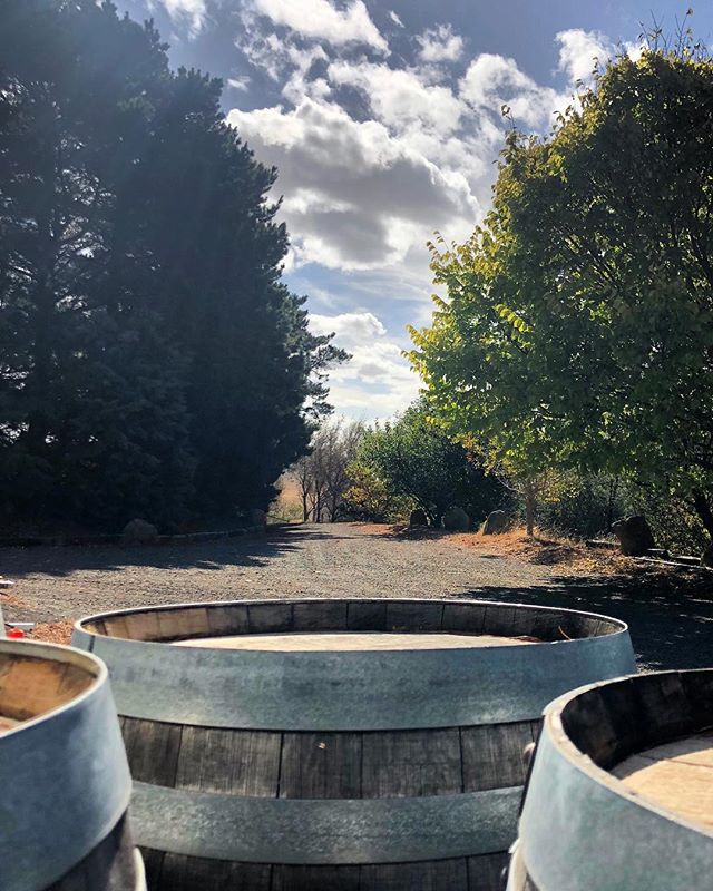It's all hands on deck at the winery #v19 #cloud9 #cloud9farm #wine #winery #winetime #winetour #winemaking #winemaker #winelover #winetasting #winestagram #wineoftheday #wineblogger #wineandcheese #redwine #wineandfood #macedonranges #daylesfordmacedonranges #daylesfordmacedonlife #wandervictoria #visitvictoria #visitmelbourne #cellardoor #smallbatch #macedonrangeswine #seeaustralia #country #countryside #country_features
