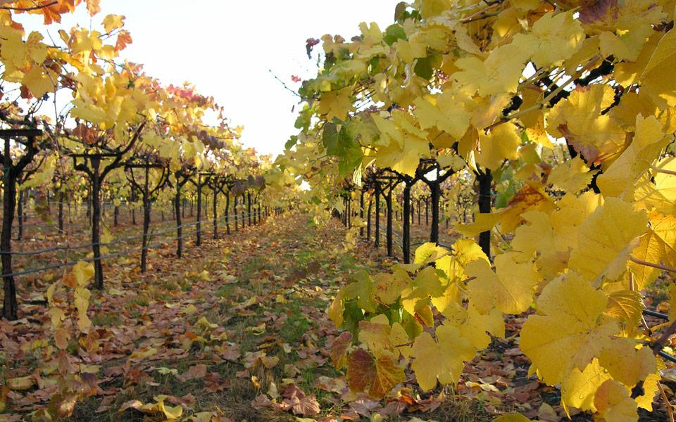 left_vineyards.jpg