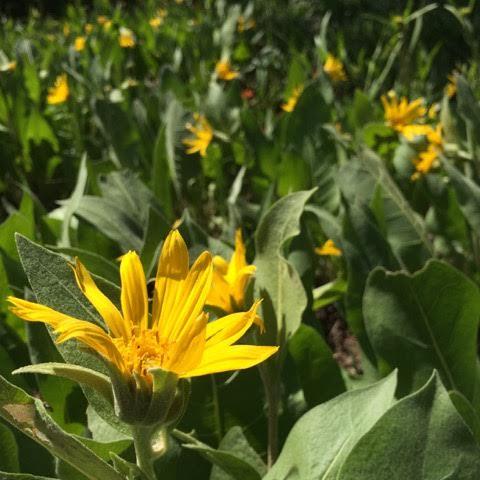 mountain flowers 2.jpg