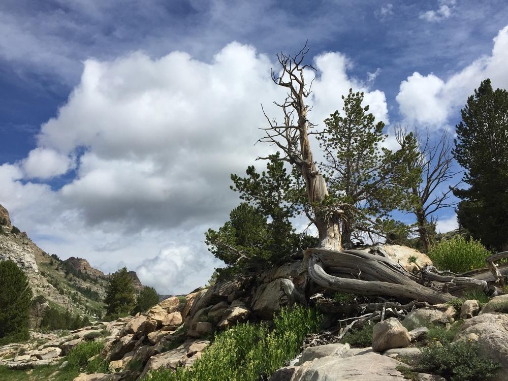 Upper Thomas Canyon Ruby Mountains