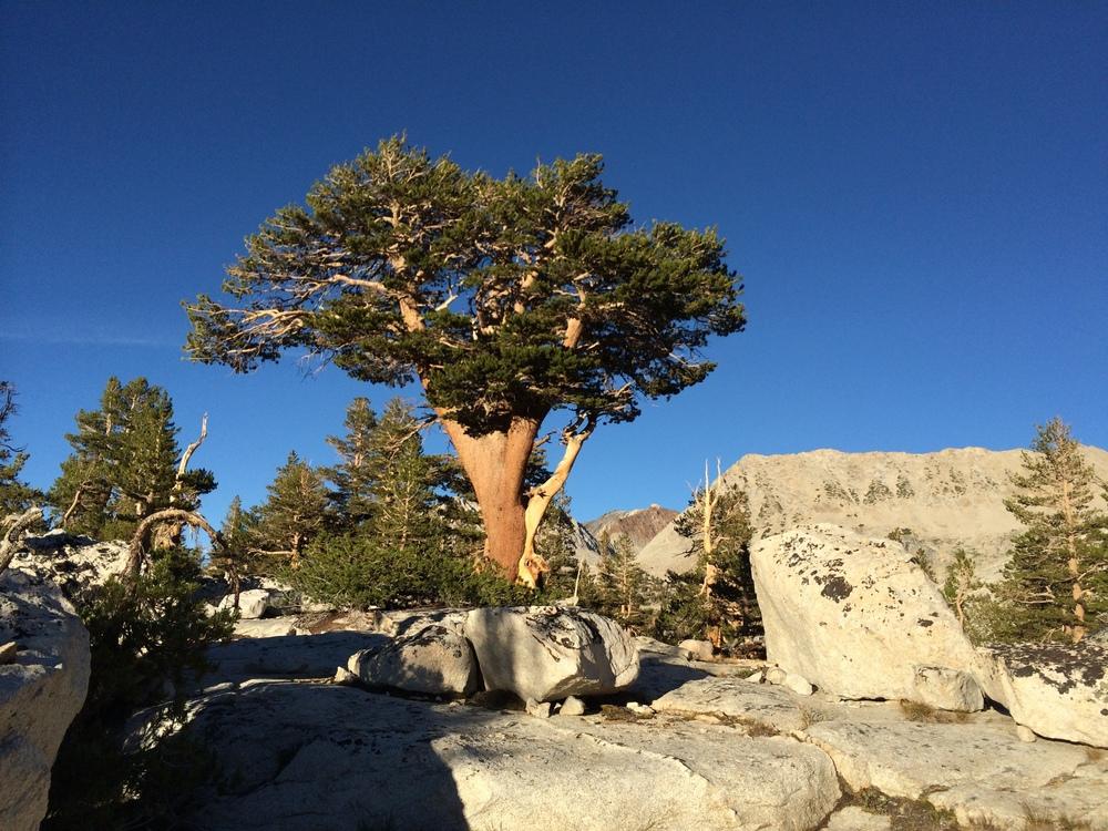 Bonsai Tree Bench Lake Plateau