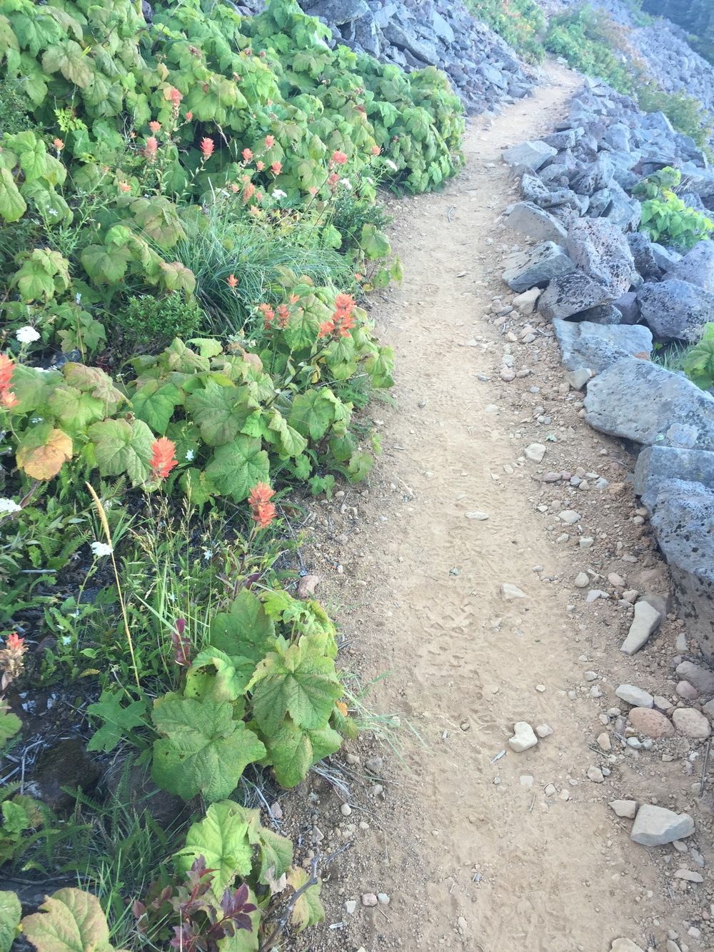 Nice, even trail tread through a rocky slope covered in thimbleberries