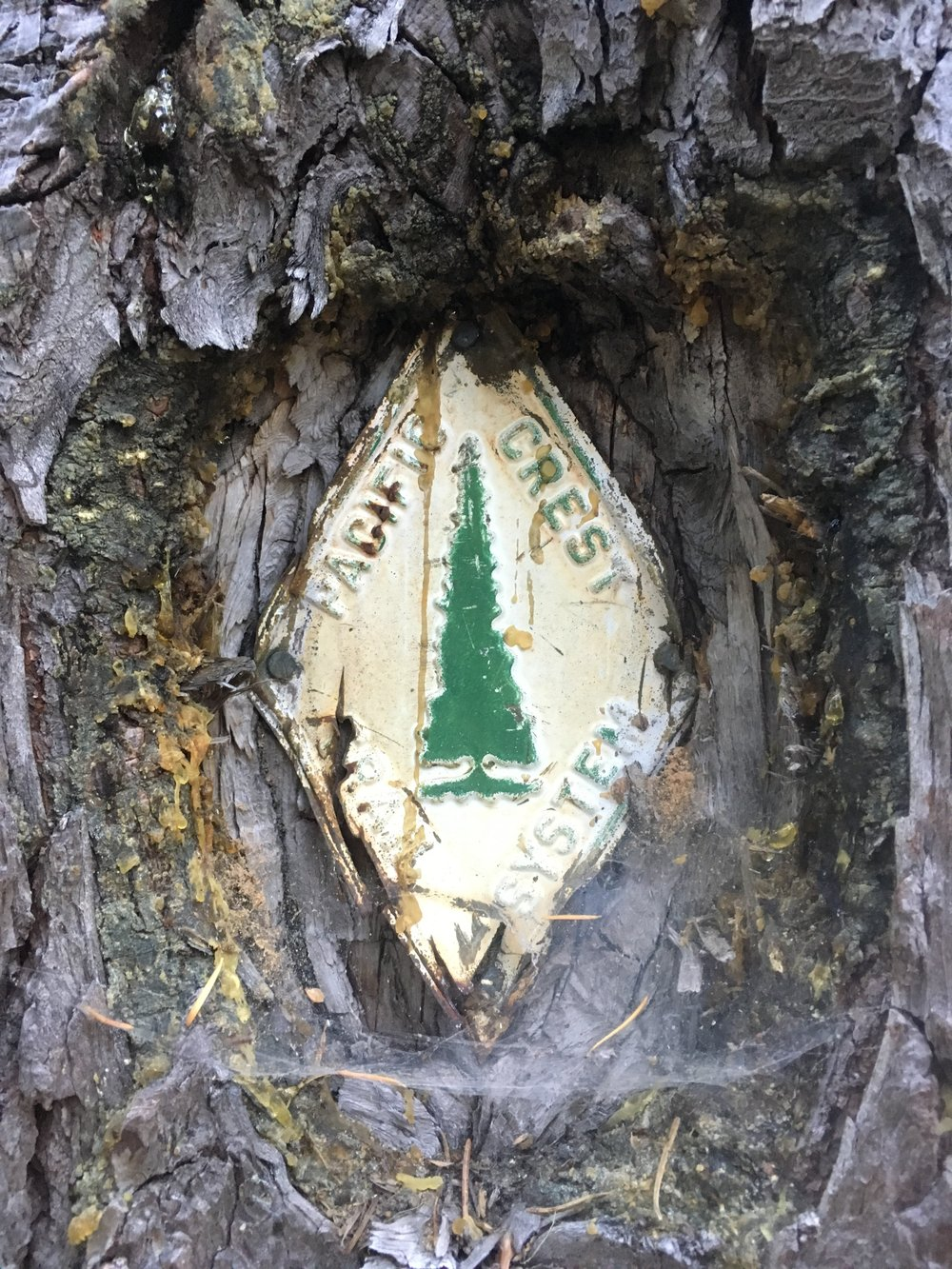 An old-style PCT sign in the Three Sisters Wilderness