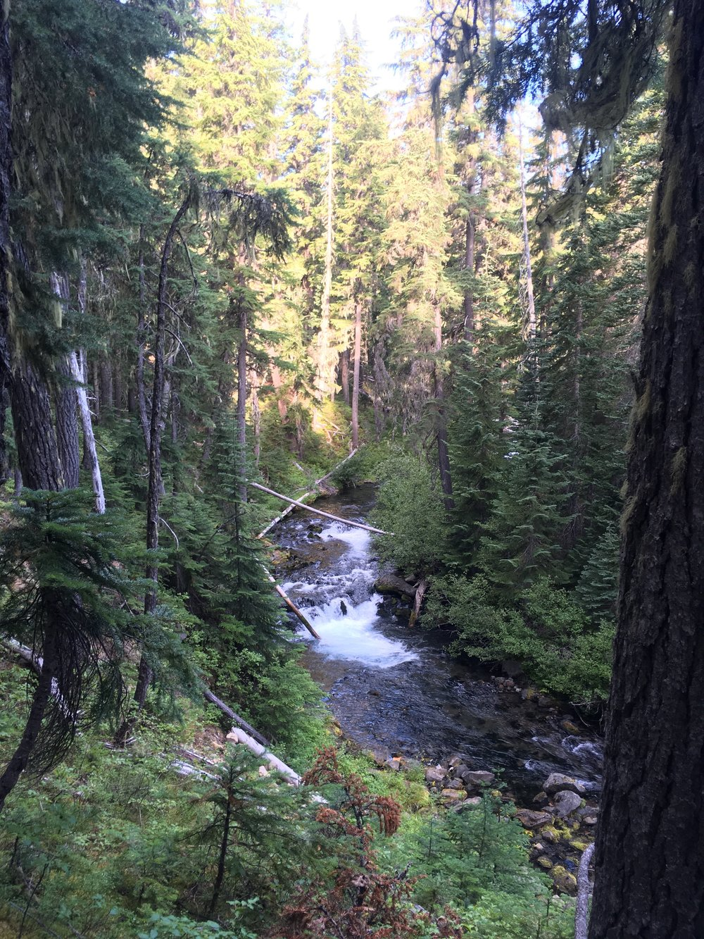 Trapper Creek, the largest creek we've seen since Mt Hood