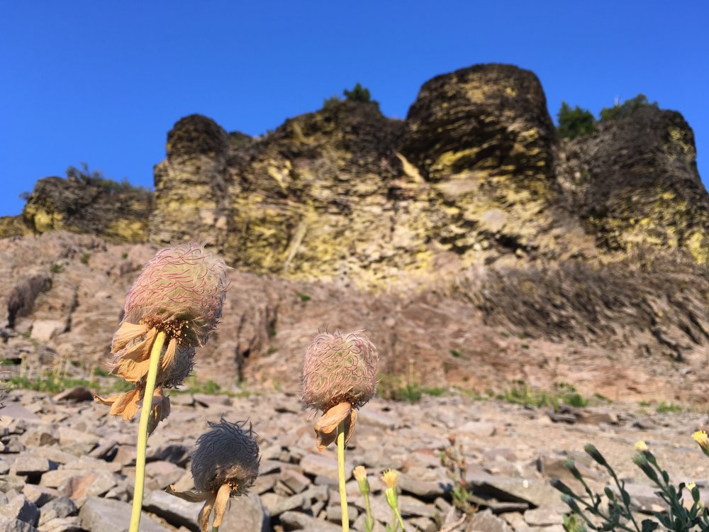 The seed heads of the flowers we called carrot lilies under Shale Butte.