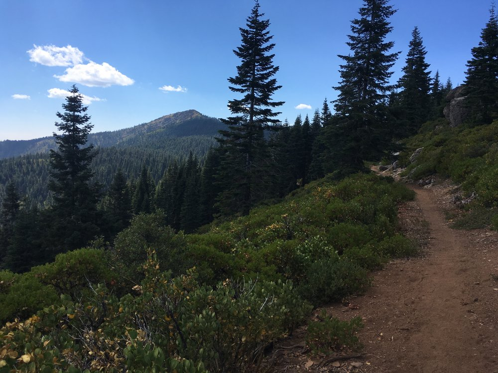 Looking back at Grizzly Peak from the manzanita covered ridge.