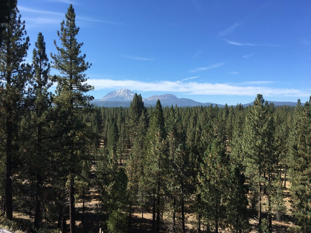 High desert forest slopes looking south to Mt. Lassen.