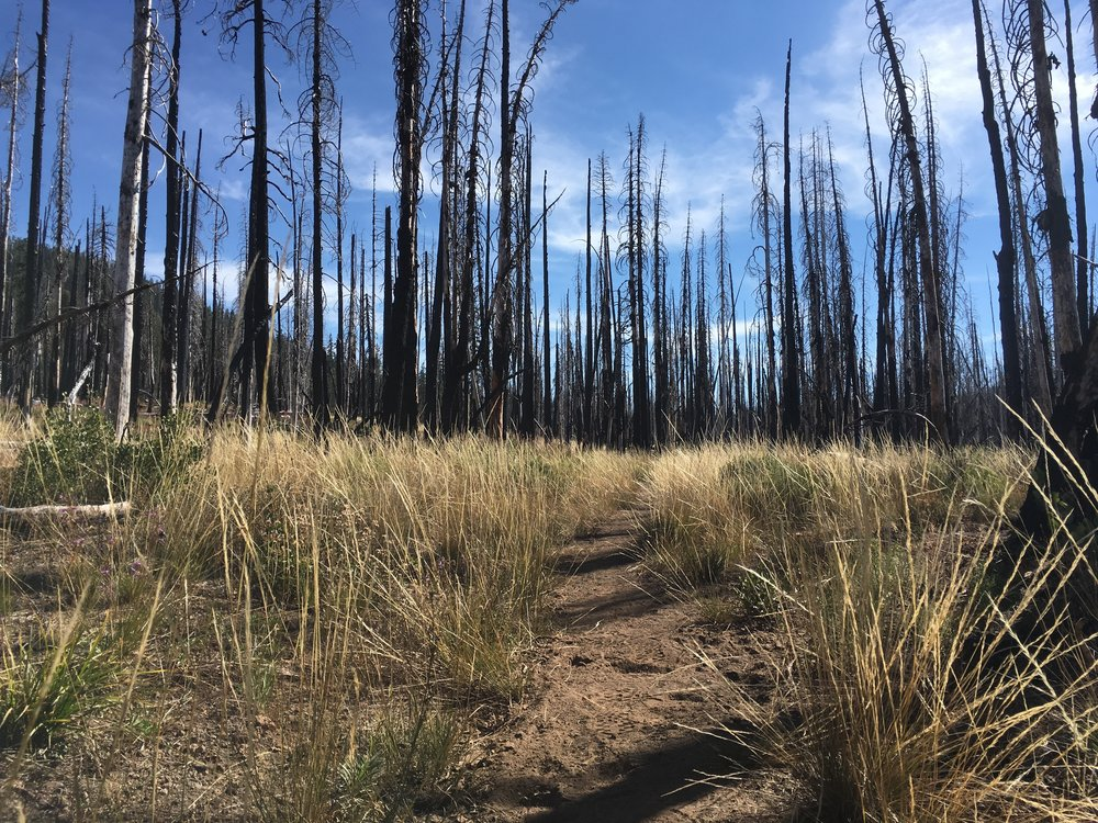 Dry grasses, wildflowers and the burned canopy of the Reading Fire.