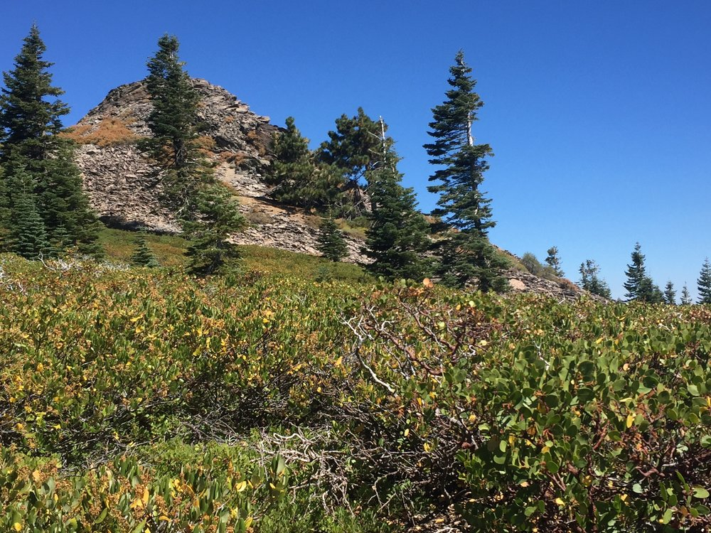 Rocky outcropping, sparse trees, and manzanita-covered slopes