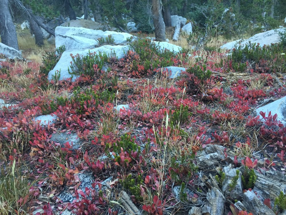 Even the forest floor is full of fall colors in northern Yosemite